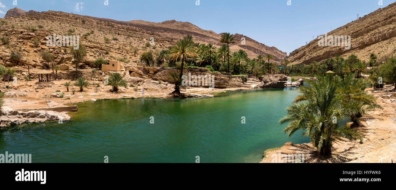 Oman desert wildlife and oasis - Stock Image