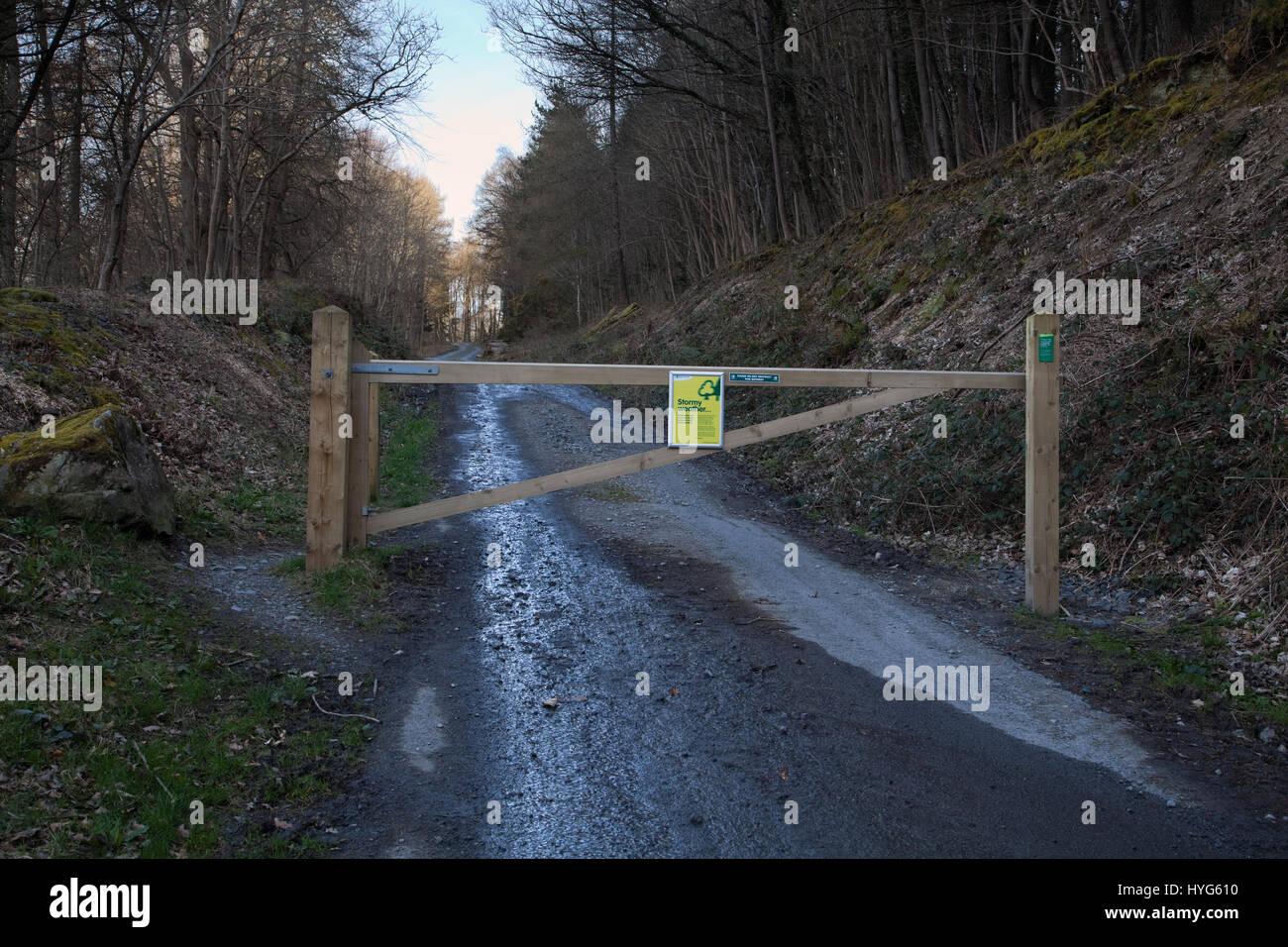 The start of a track into Dodd Wood in the English Lake District - Stock Image
