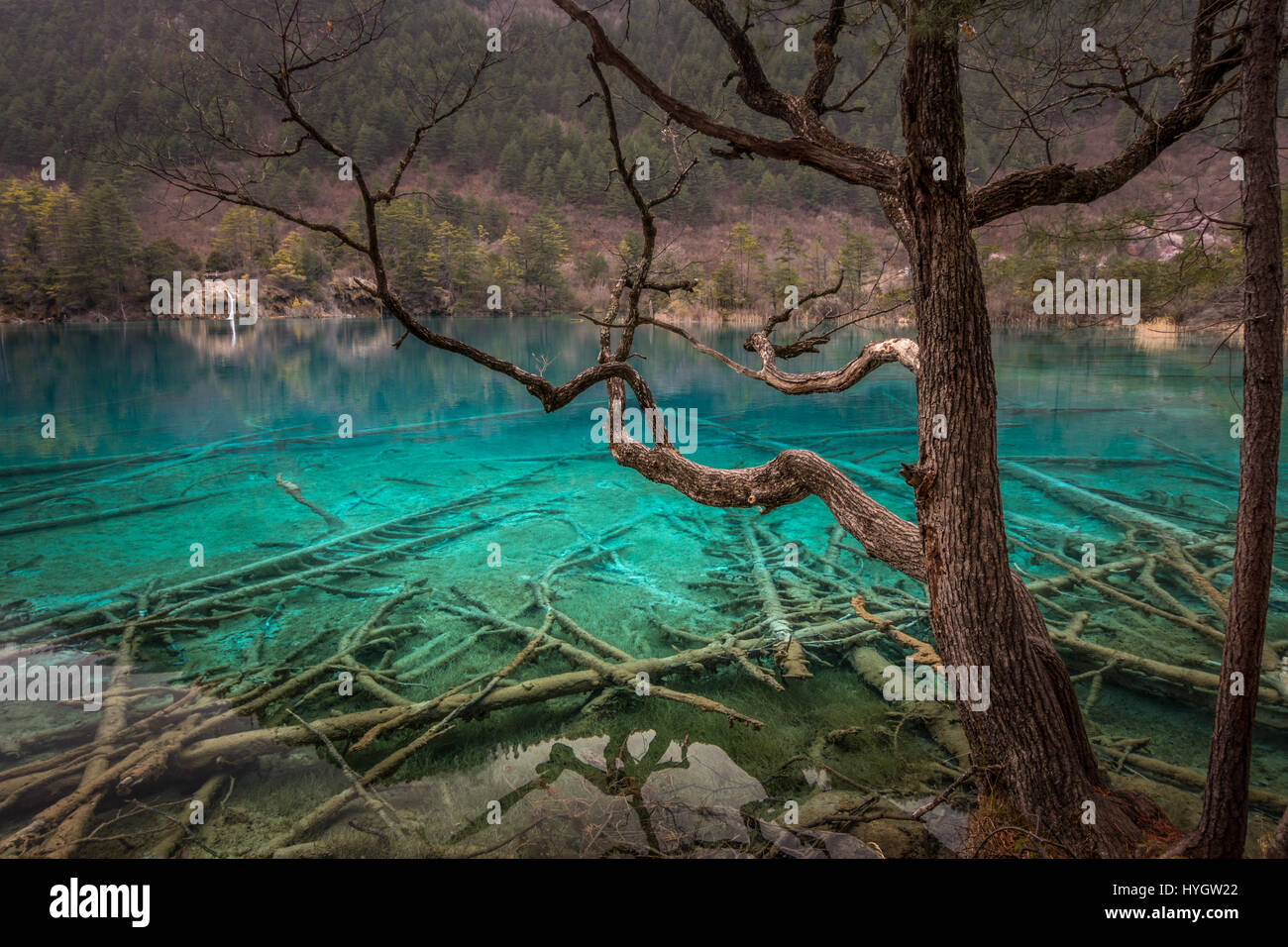 Home to a small population of endangered giant panda & snub-nosed monkey, the colourful Jiuzhaigou National Park, Stock Photo