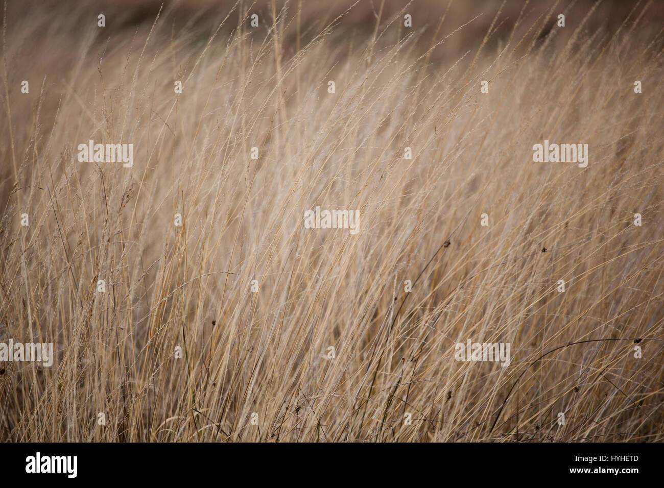 the beauty in the detail - Richmond Park, London - Stock Image