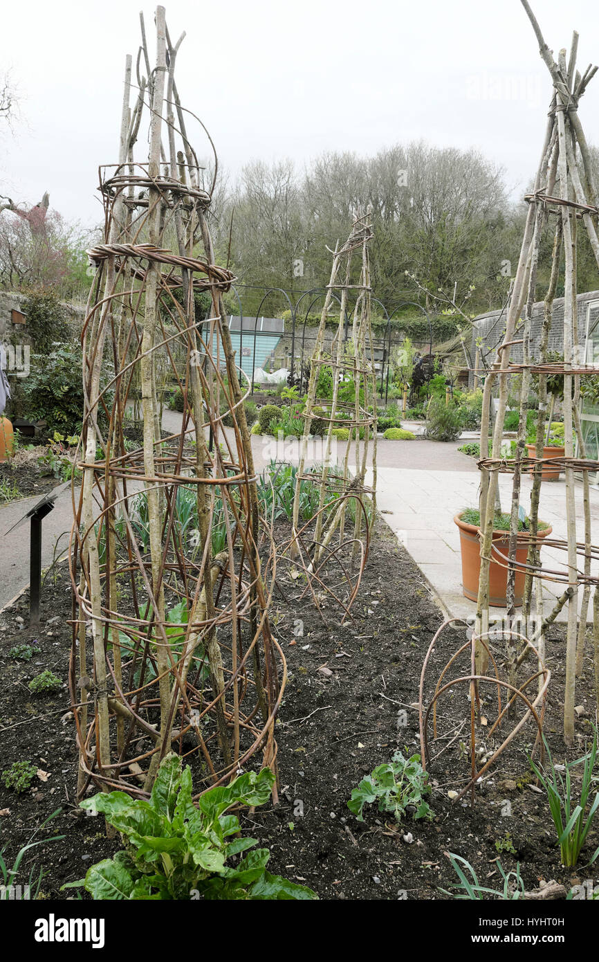 Willow Branch Support Structures Frames In A Herb Veg Patch In Early Spring  At The National