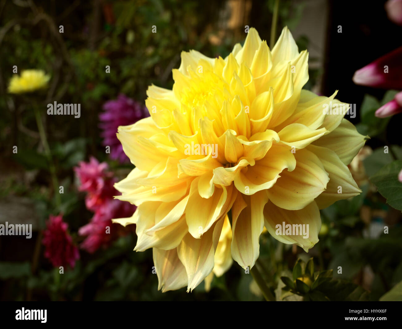 Beautiful Flower - Stock Image
