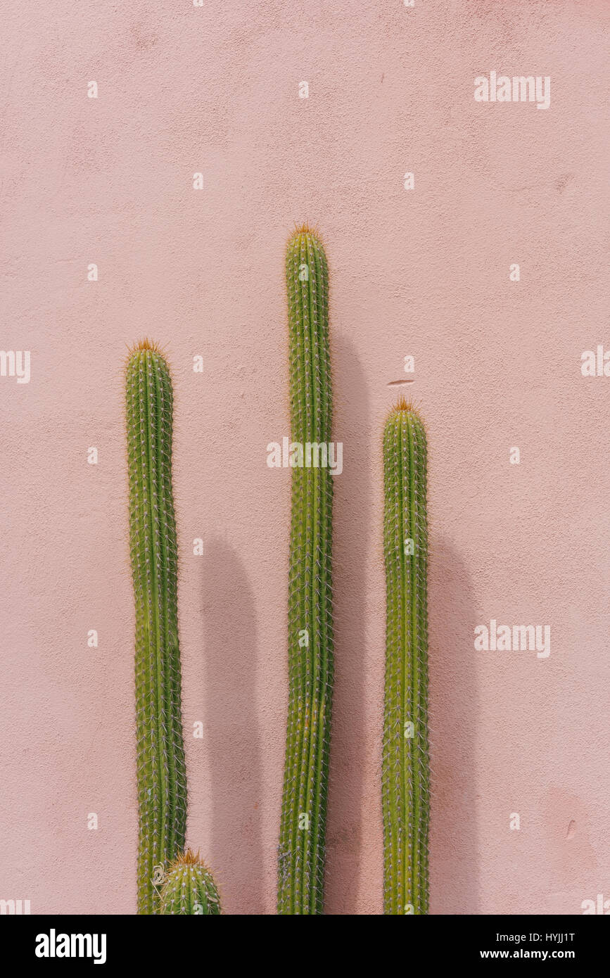 View of Cacti on the streets in Tucson, Arizona - Stock Image