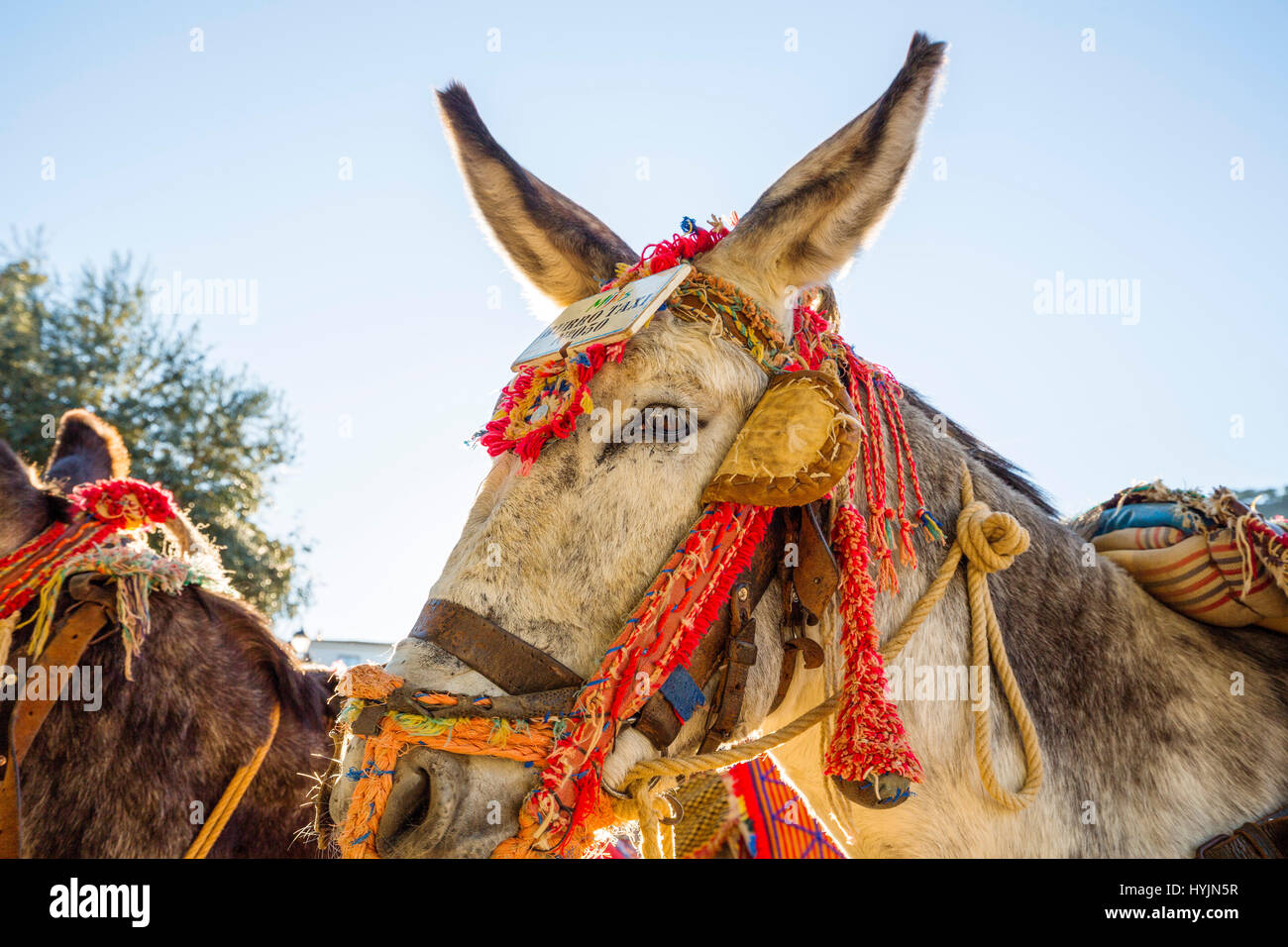 Donkey Taxi, white village of Mijas. Malaga province Costa del Sol. Andalusia Southern Spain, Europe - Stock Image