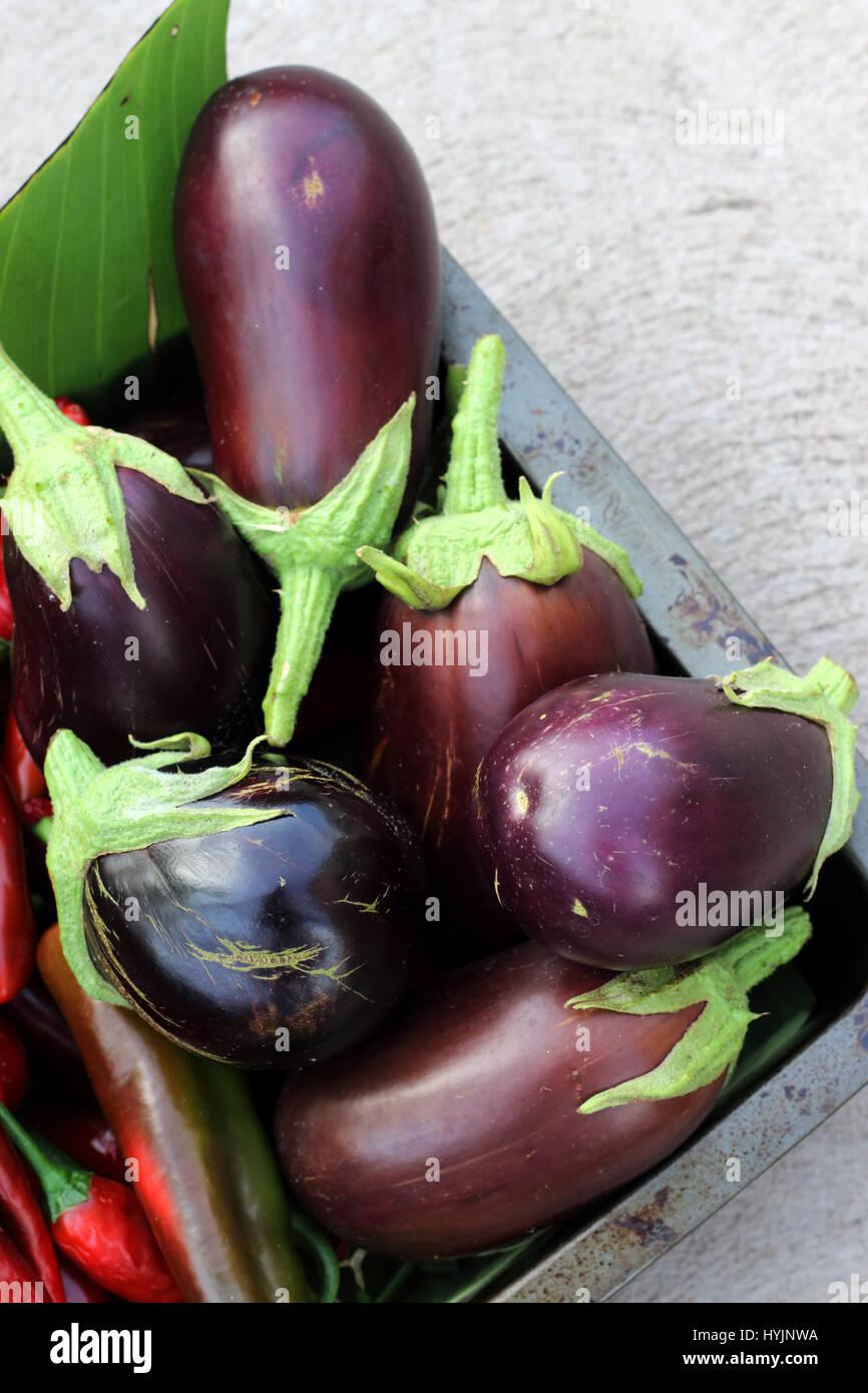 Freshly picked homegrown Black Beauty eggplants - Stock Image