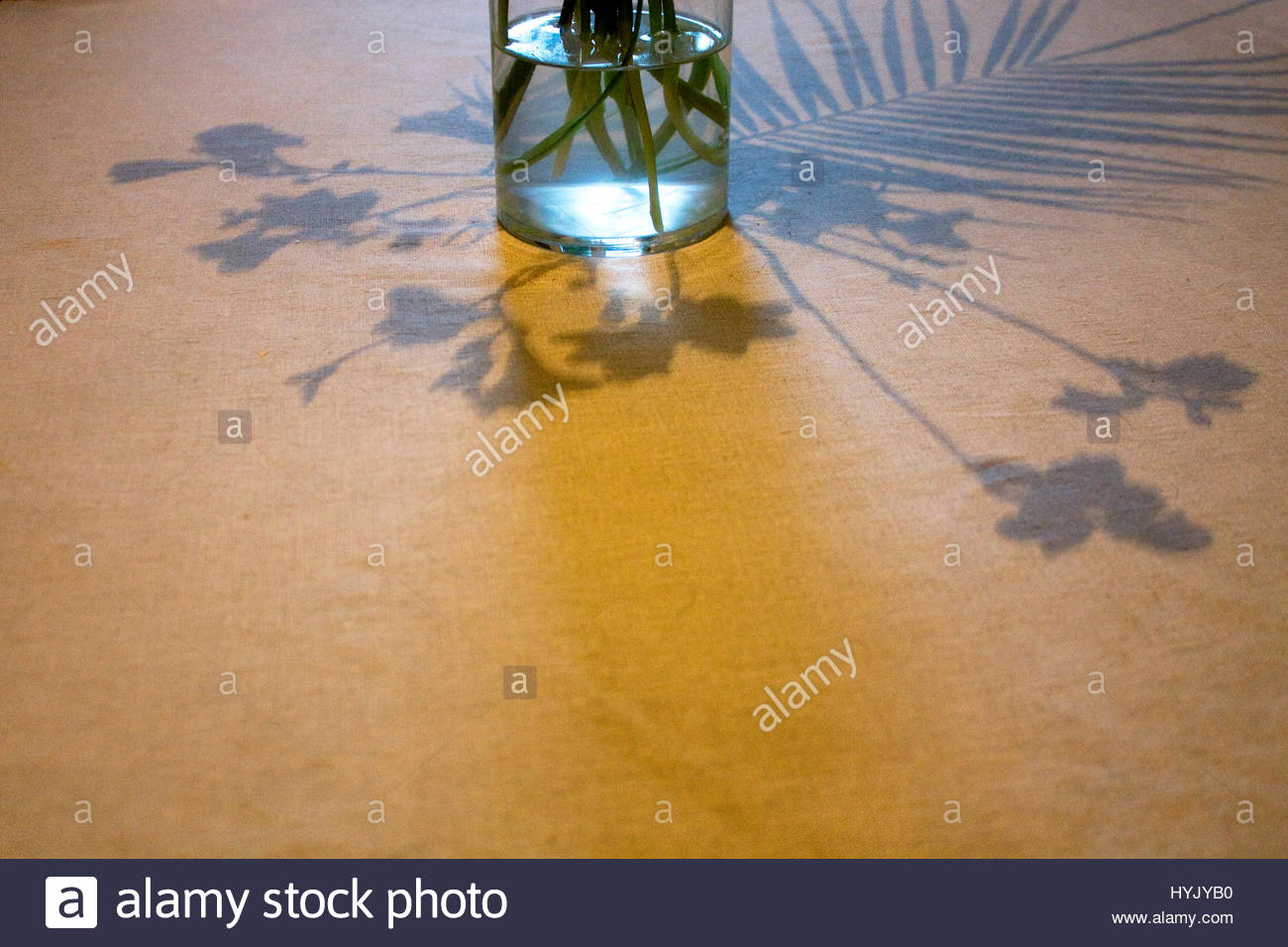 Shadow of flowers in a vase - Stock Image