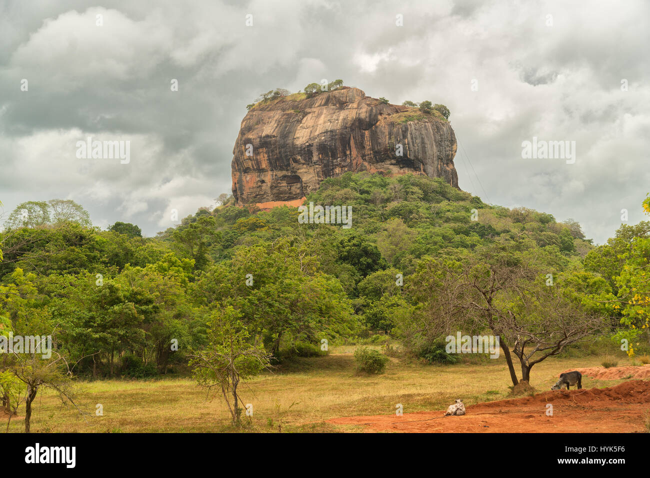 Sigiriya Rock Fortress rises straight out ot the jungle, cultural triangle, Sri Lanka, UNSCEO World Herritage - Stock Image