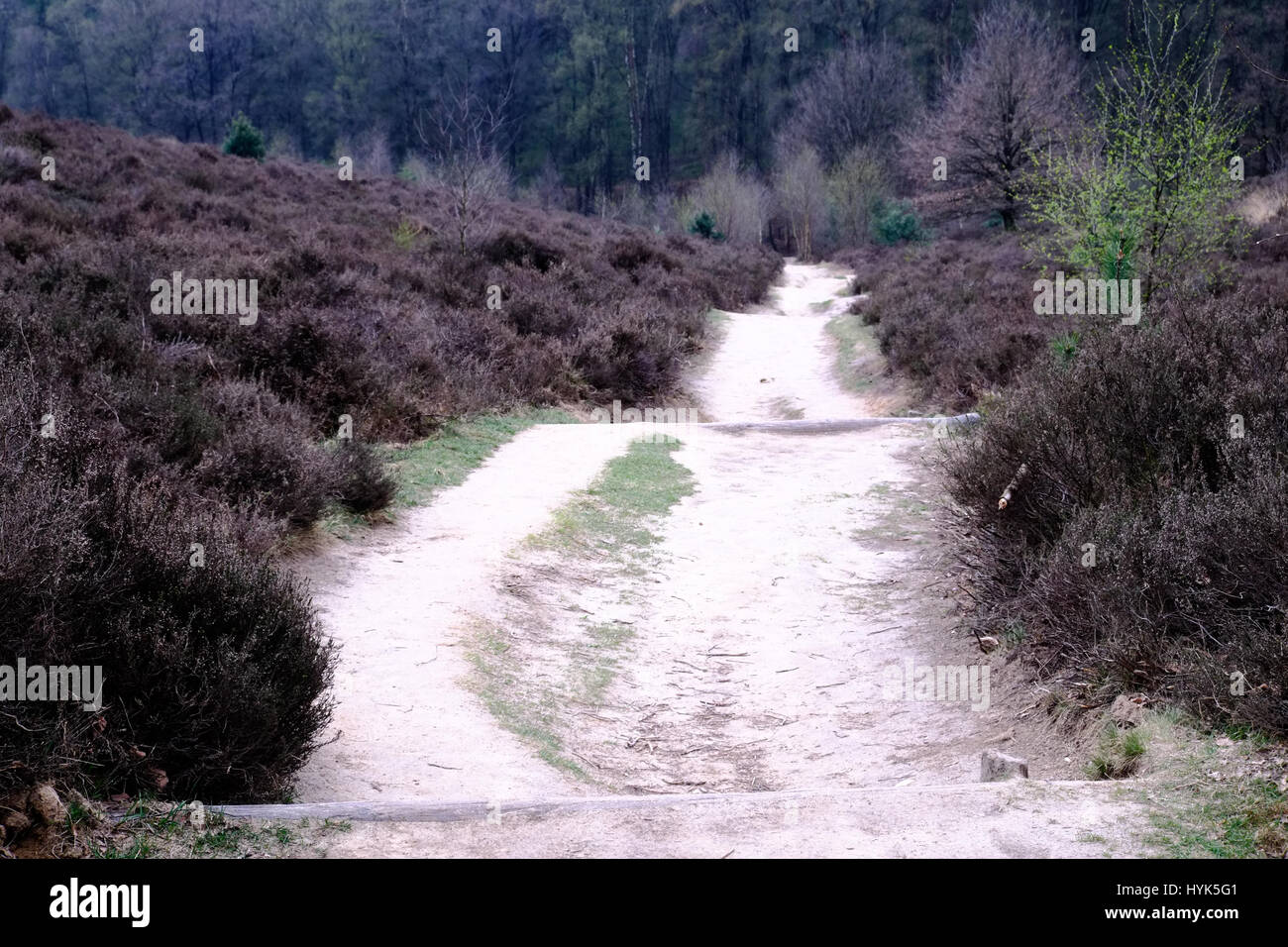 Heath and path at the Posbank in Rheden, National park Veluwe, Netherlands. Stock Photo