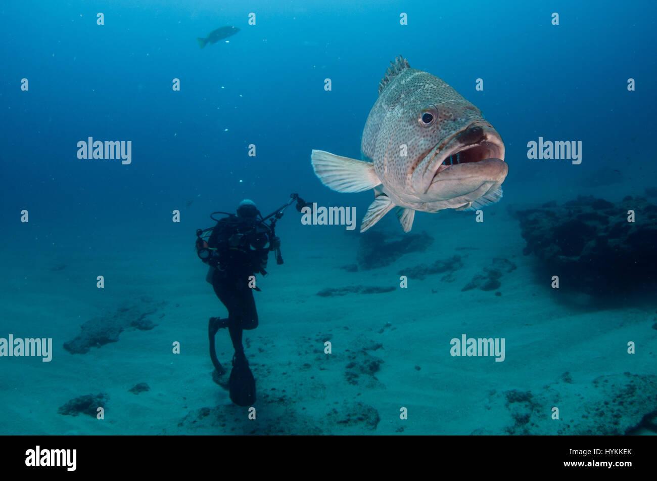 treasure chest underwater stock photos treasure chest underwater