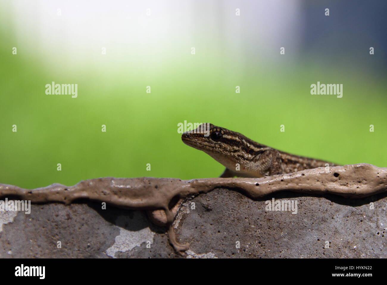 Wildlife in urban spaces - Stock Image