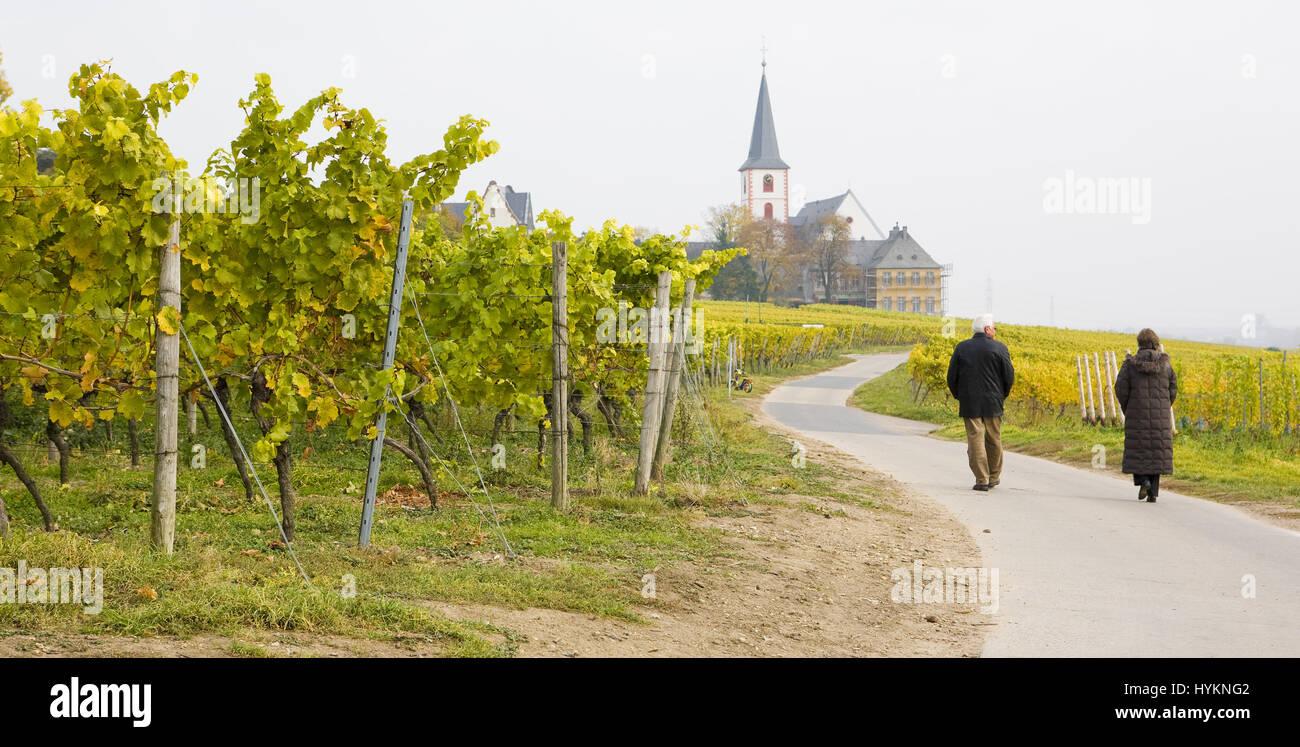 Hochheim, Rheingau, Germany - Stock Image