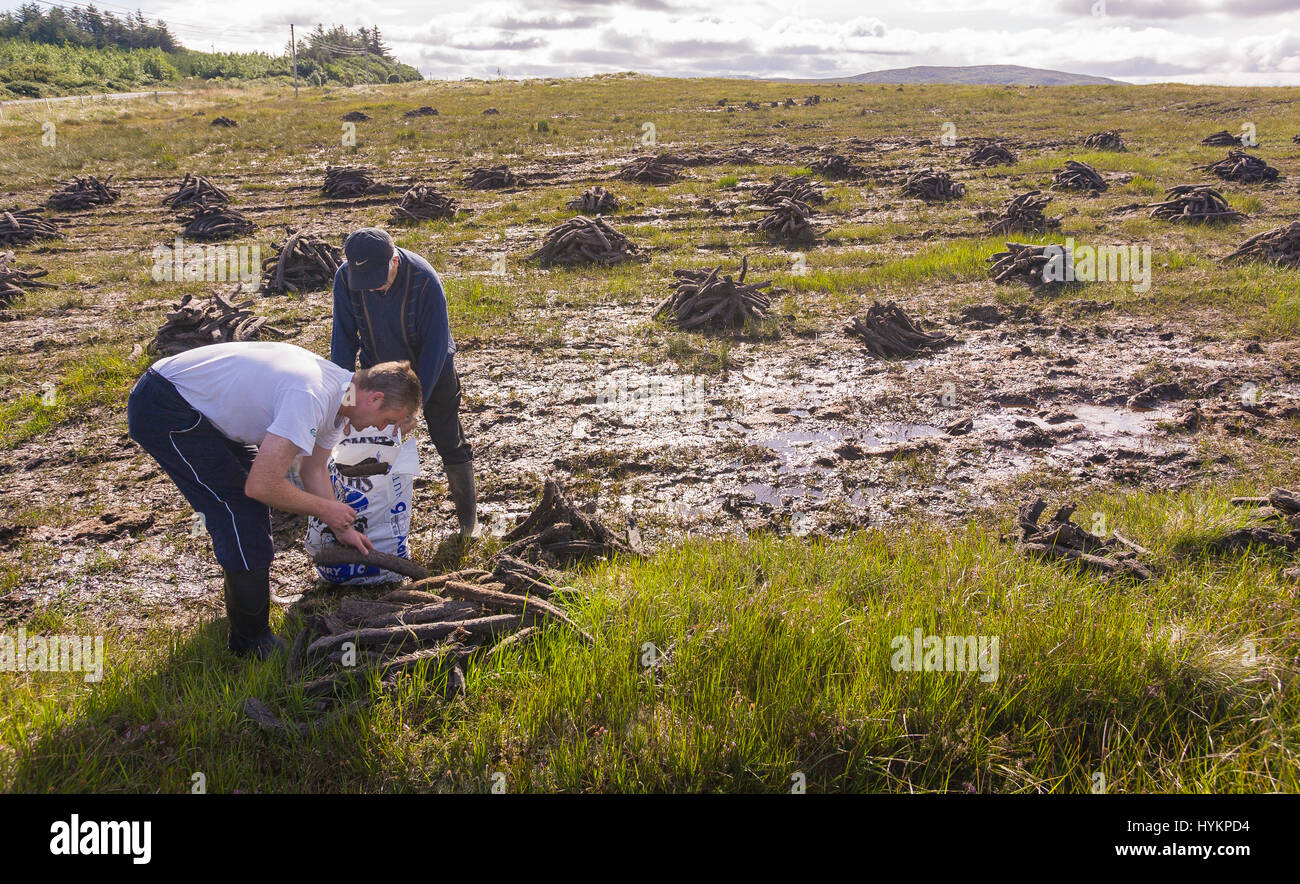 DONEGAL, IRELAND - Farmers harvest peat for fuel,  in peatland bog. - Stock Image