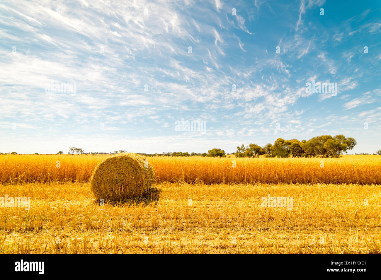 Hay and straw bales in the end of summer. Western Australia. - Stock Image