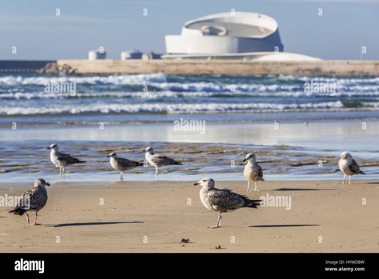 Sea gulls on a beach of Nevogilde civil parish in Porto city, Portugal. Port of Leixoes new Cruise Terminal building Stock Photo