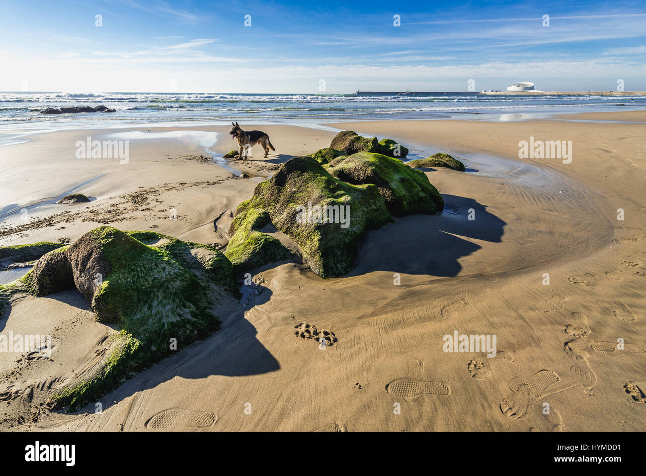 Mossy rocks on the beach of Nevogilde civil parish in Porto, second largest city in Portugal Stock Photo