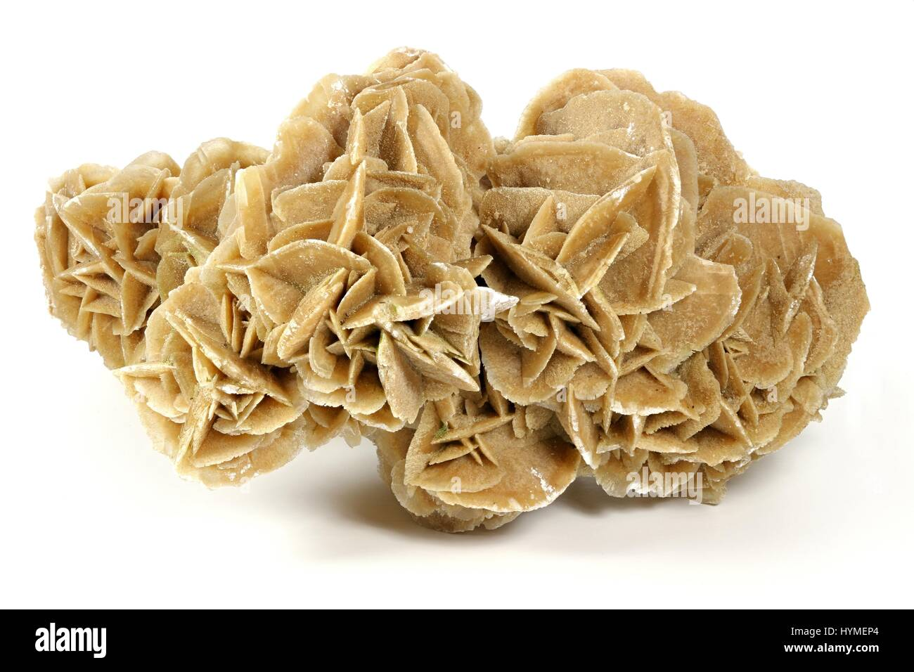 desert rose found in Tunisia isolated on white background - Stock Image
