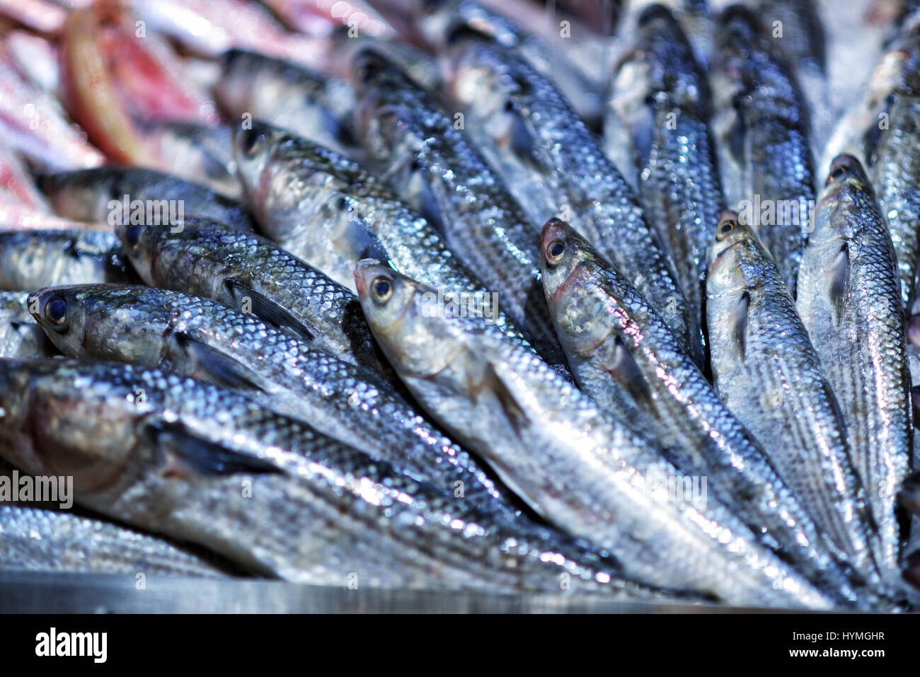 Seafood on ice at the fish market - Stock Image