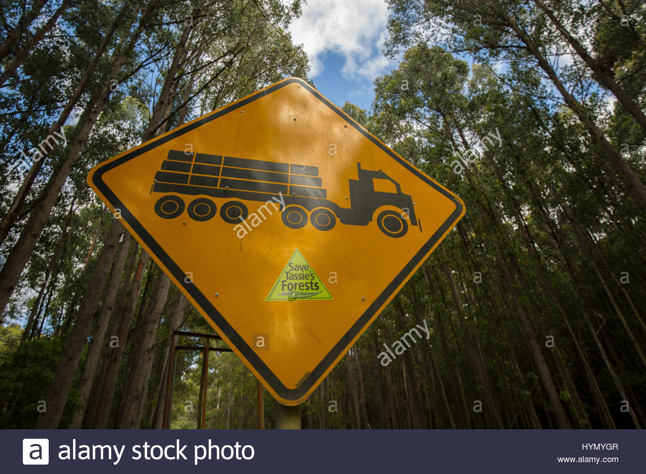 A protest sticker, Save Tassie's Forests, stuck on to a logging road sign which is in front of a grove of trees, - Stock Image