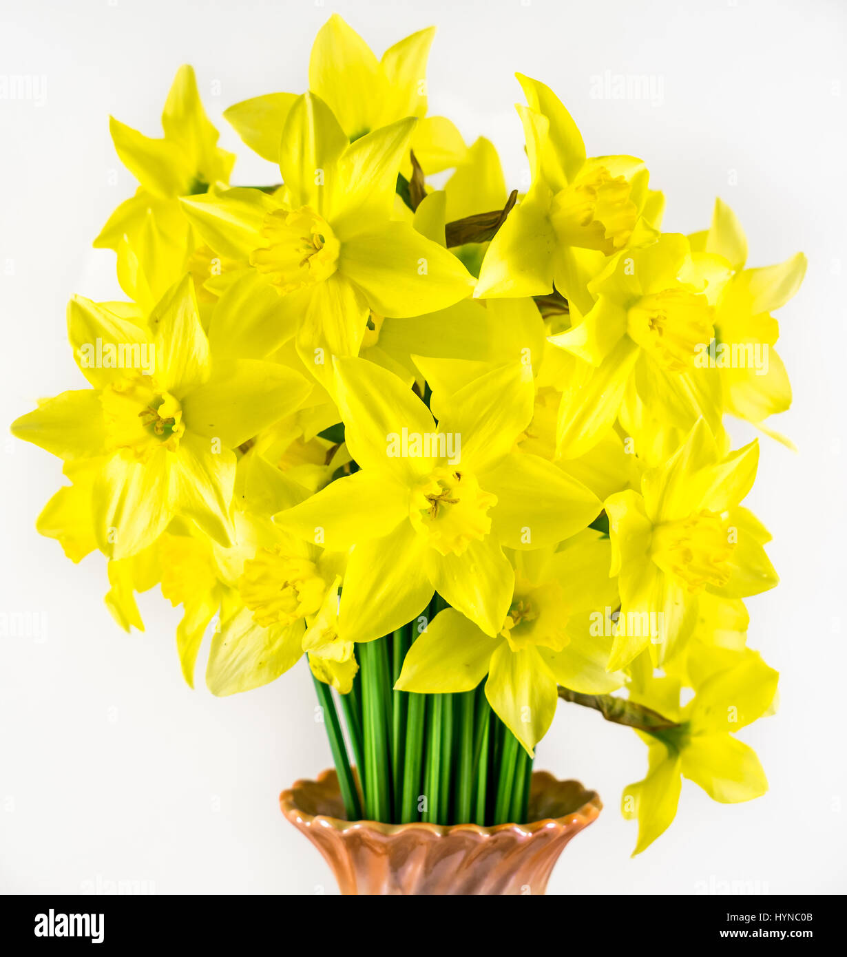 Narcissus - Stock Image