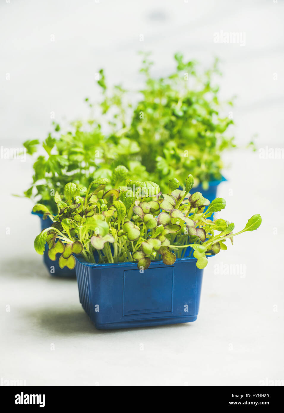Fresh spring green live radish kress sprouts, white marble background - Stock Image