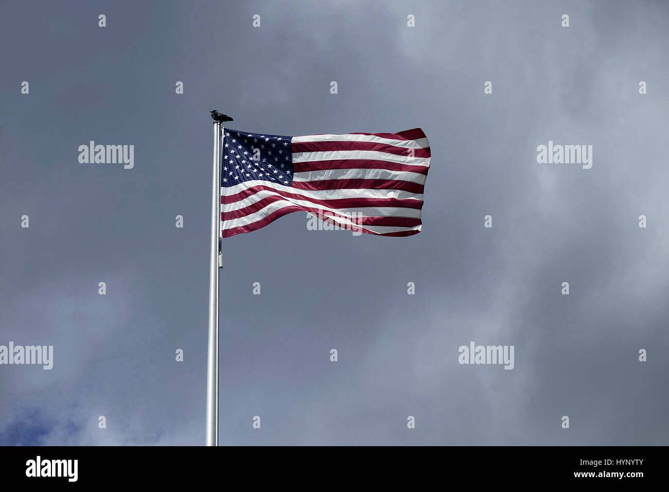 Berlin, Germany. 10th June, 2016. A bird (raven? crow?) sitting on a flagpole with the US-American Flag at the US - Stock Image