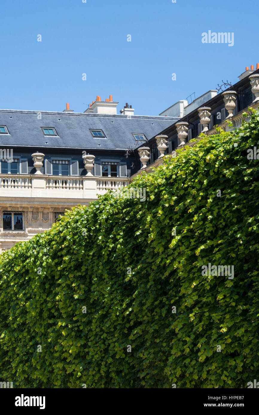 La France. The garden of the Royal Palace, Paris 75001 and its limestone lime trees - Stock Image