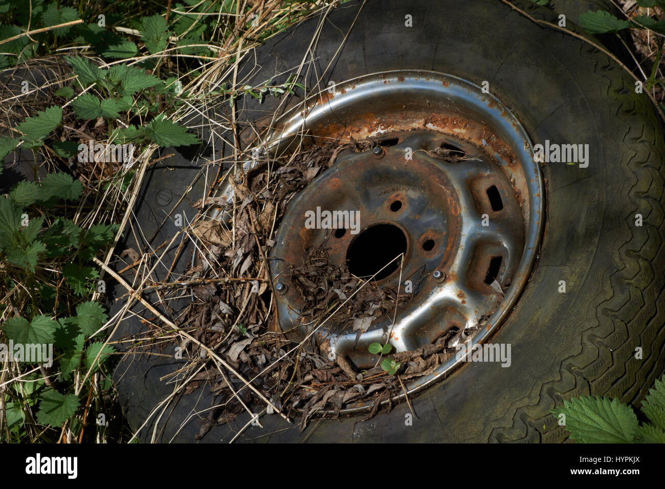 Old tyre dumped in hedgerow. UK - Stock Image