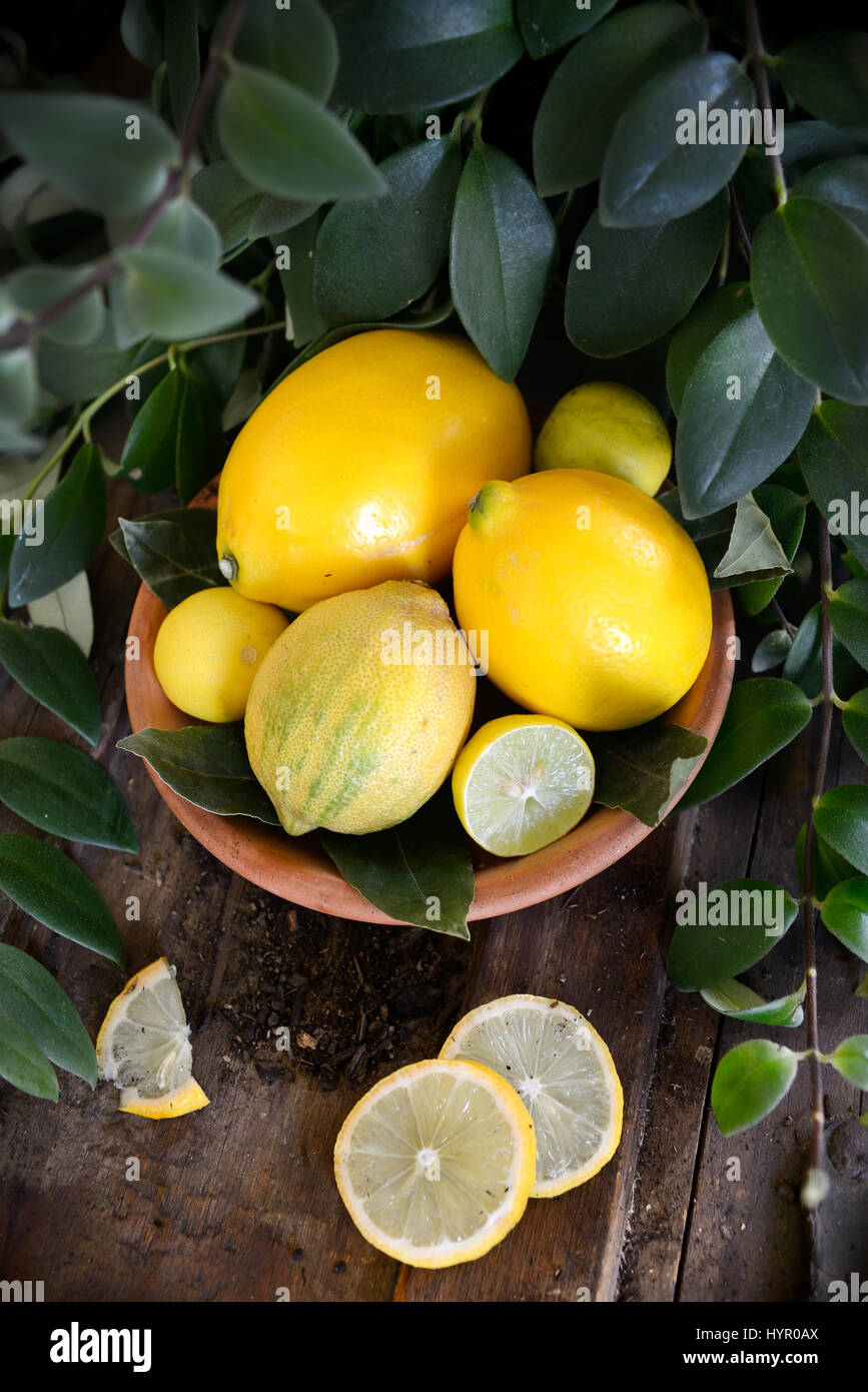 Lemons and Limes in terracota saucer surrounded by green plants. Stock Photo