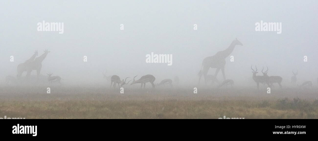 South africa plains - Stock Image