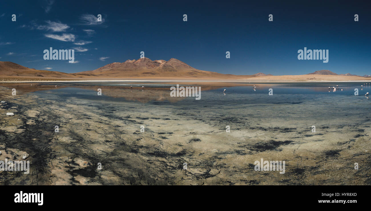 Panoramic view of a few pink flamingos in Laguna Cañapa, a endorheic salt lake in the Potosí Department - Stock Image