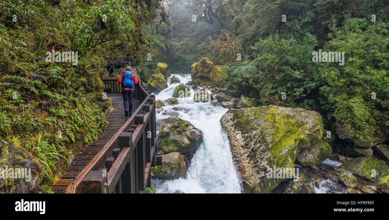 Hiker on wooden walkway along the river, way to Lake Marian, Fiordland National Park, Te Anau, Southland Region, - Stock Image