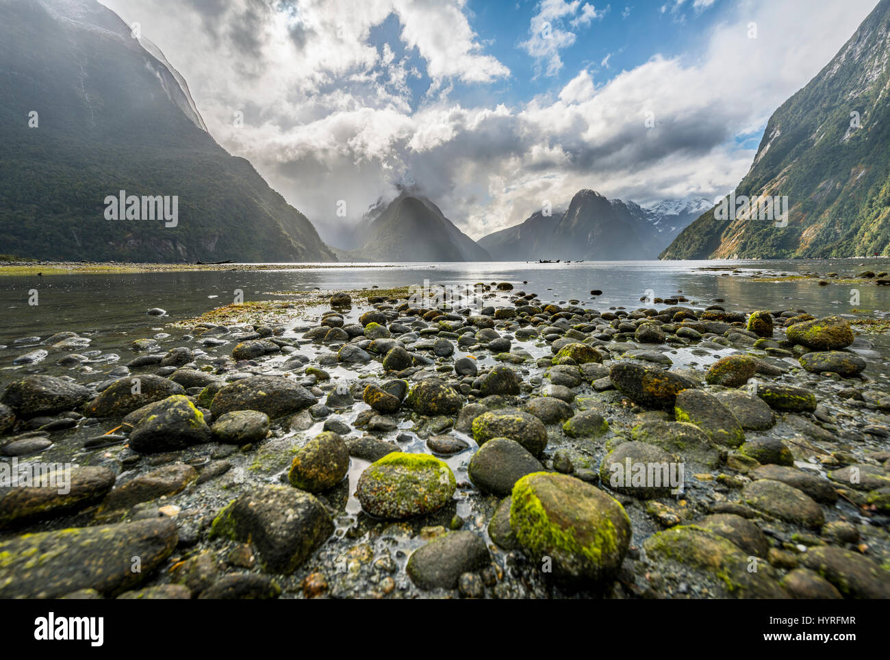 Moss covered stones, Miter Peak, Milford Sound, Fiordland National Park, Te Anau, Southland Region, Southland, New - Stock Image