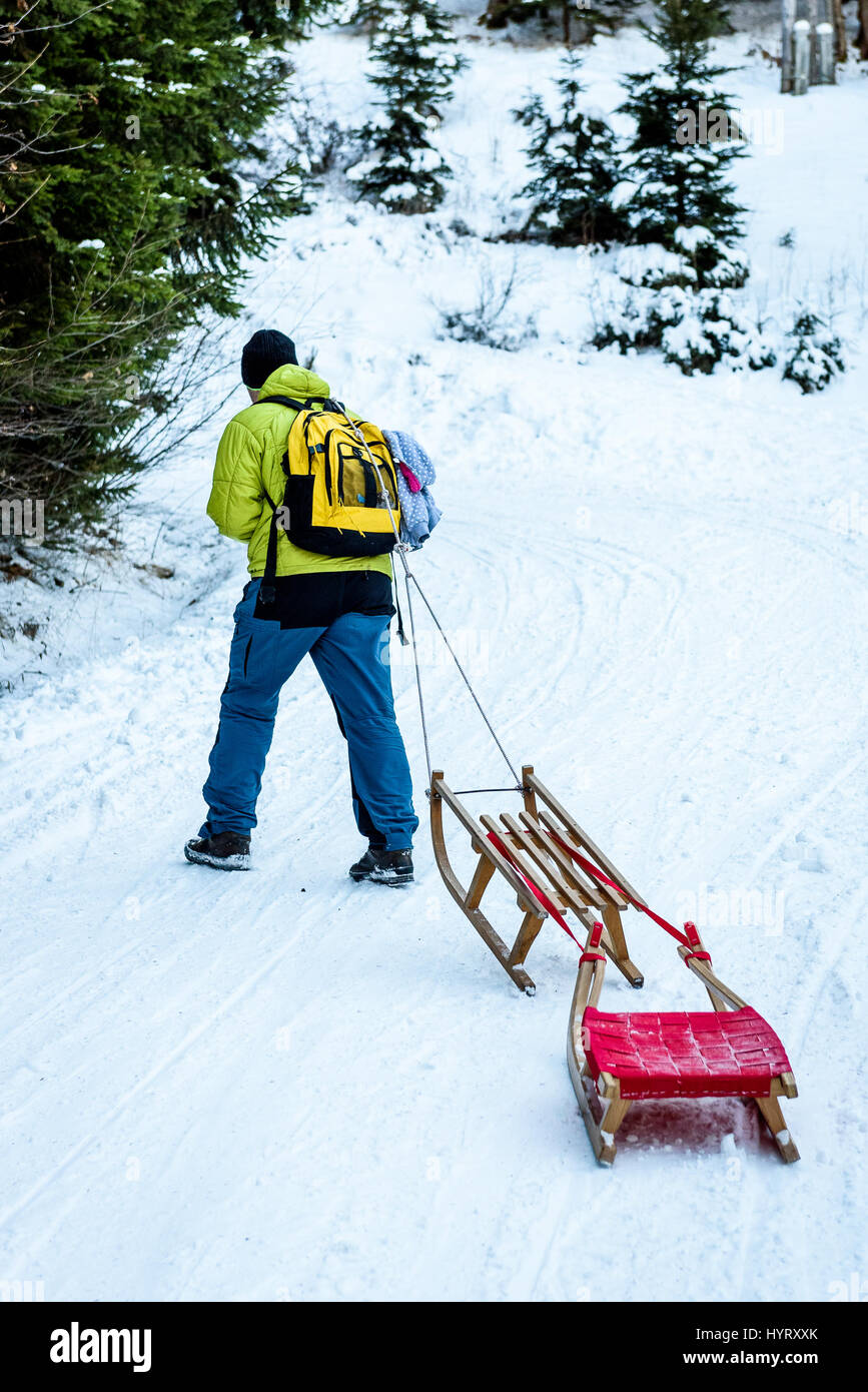 Person is pulling sledge on the mountain road in woods. Active people in the winter sports activities with sleigh - Stock Image