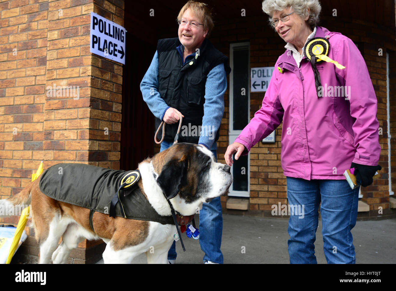 SNP-supporting St Bernard, Carlos, outside a polling station in Dalgety Bay, with his master Duncan Ashley and party - Stock Image
