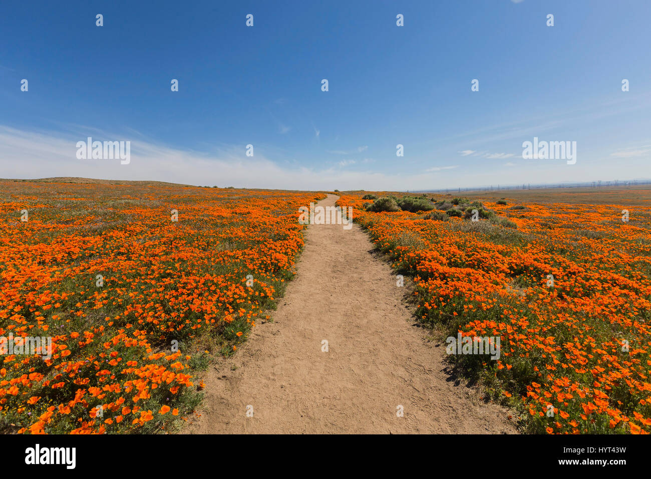 Dirt path at the Antelope Valley California Poppy Reserve State Park. - Stock Image