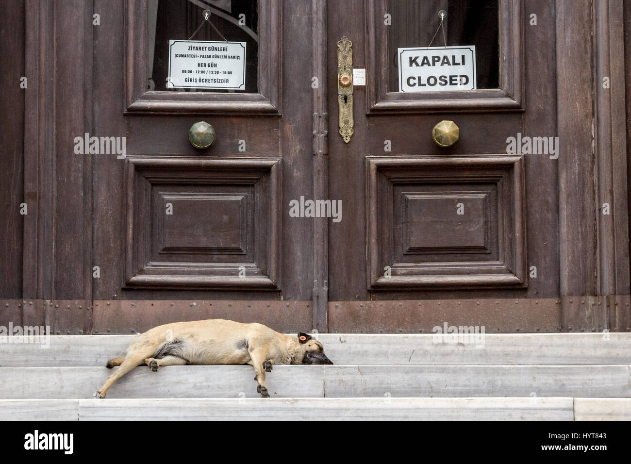 Dog sleeping in front of a closed administration in Istanbul, Turkey  Picture of a dog sleeping in front of a closed - Stock Image