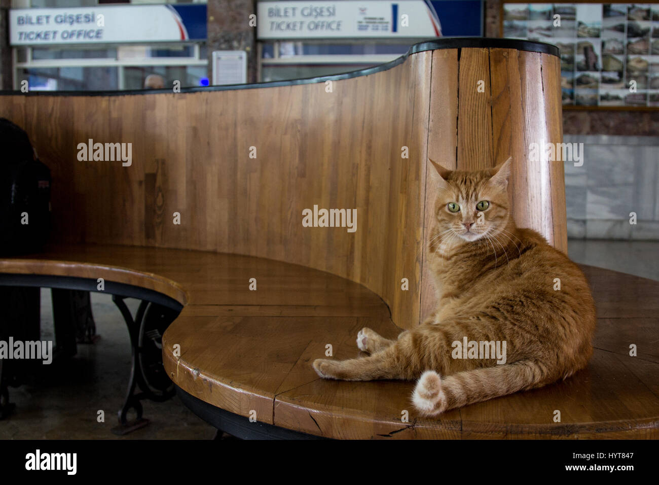 Stray cat resting in Istanbul Sirkeci train station's waiting room, Turkey  Picture of a ginger stray cat laid - Stock Image