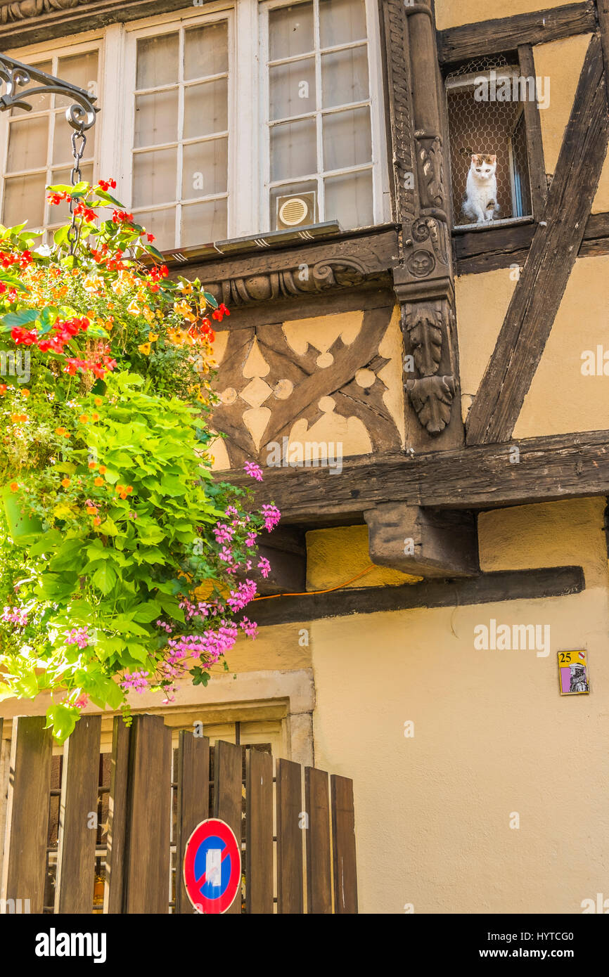 flower-decked facade of traditional alsatian house with cat looking down on the street, - Stock Image