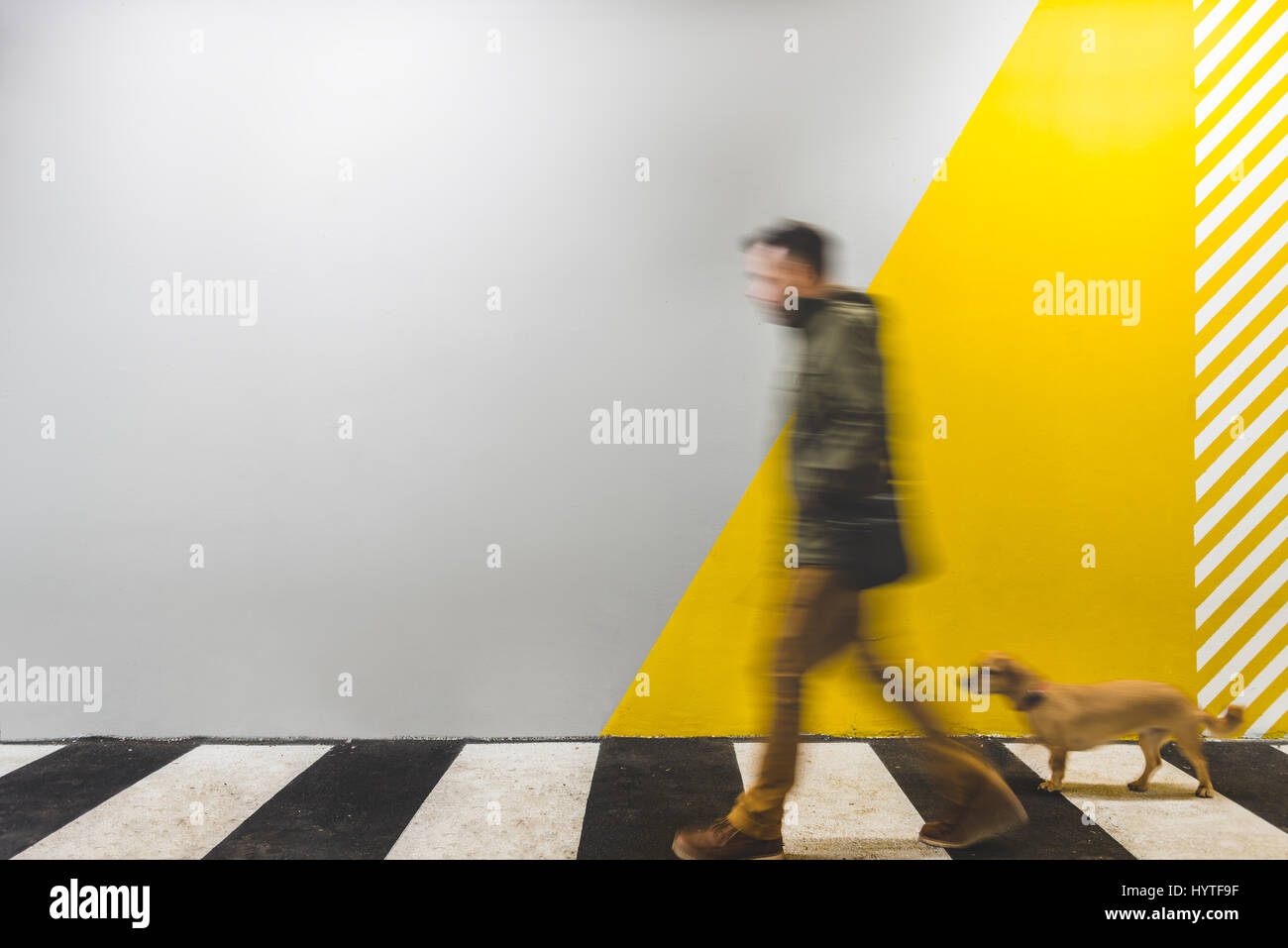Man with a small yellow dog walking on underground passage mark with zebra crossing - Stock Image
