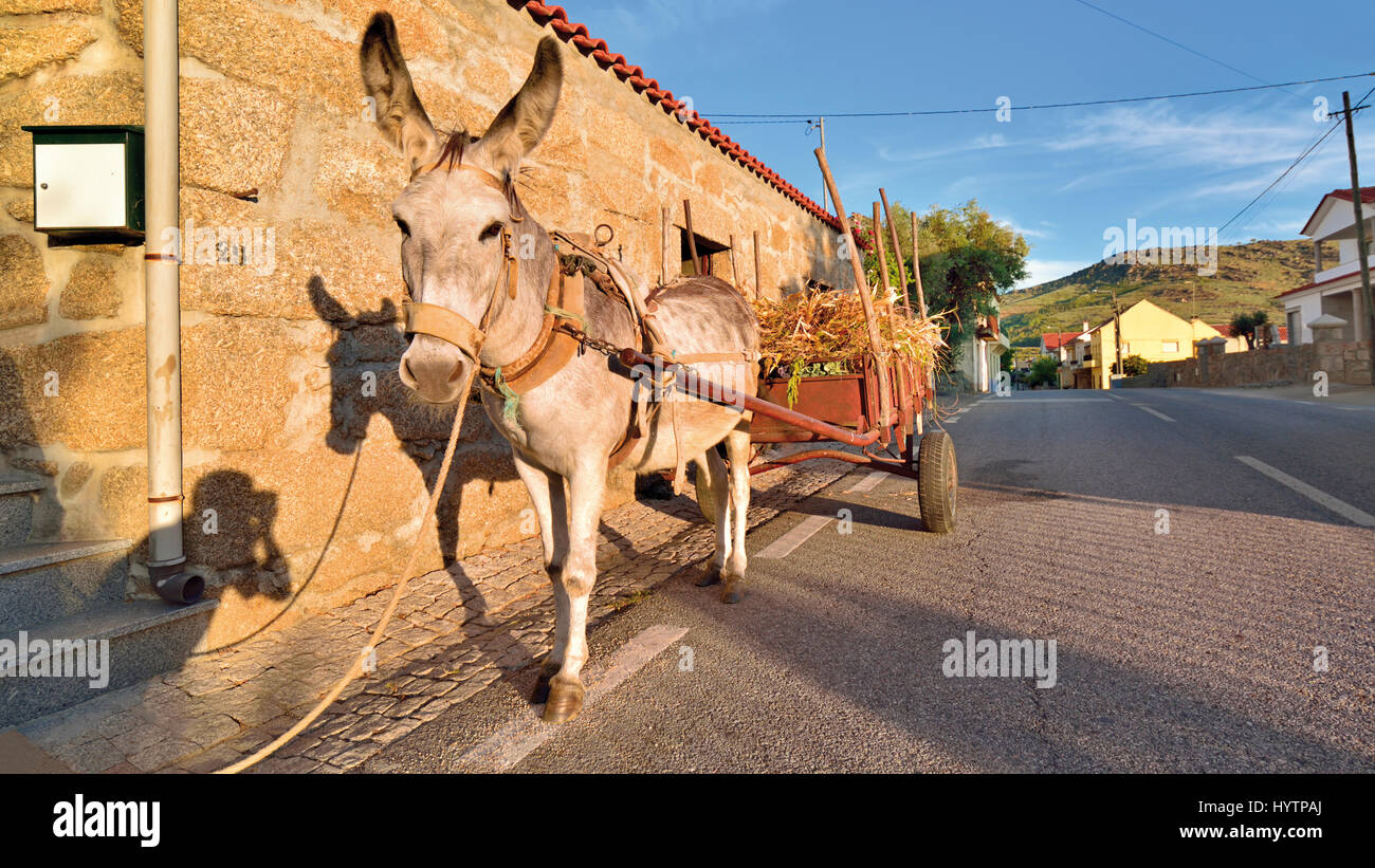 Portugal: Traditional donkey carriage parking in front of a granite stone rustic house - Stock Image