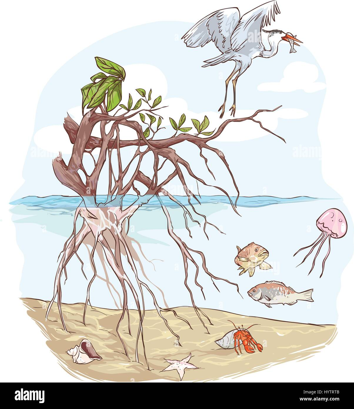vector illustration of a Marine Ecosystem - Stock Vector