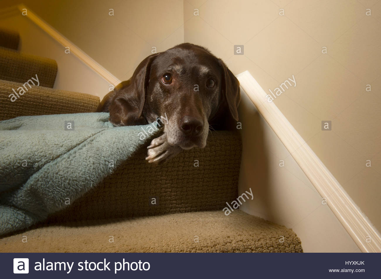 Close-up of a dog sleeping on the edge of the stairs. - Stock Image