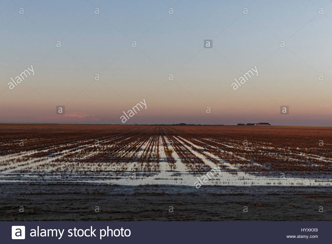 A feedyard in Ingalls, Kansas. - Stock Image