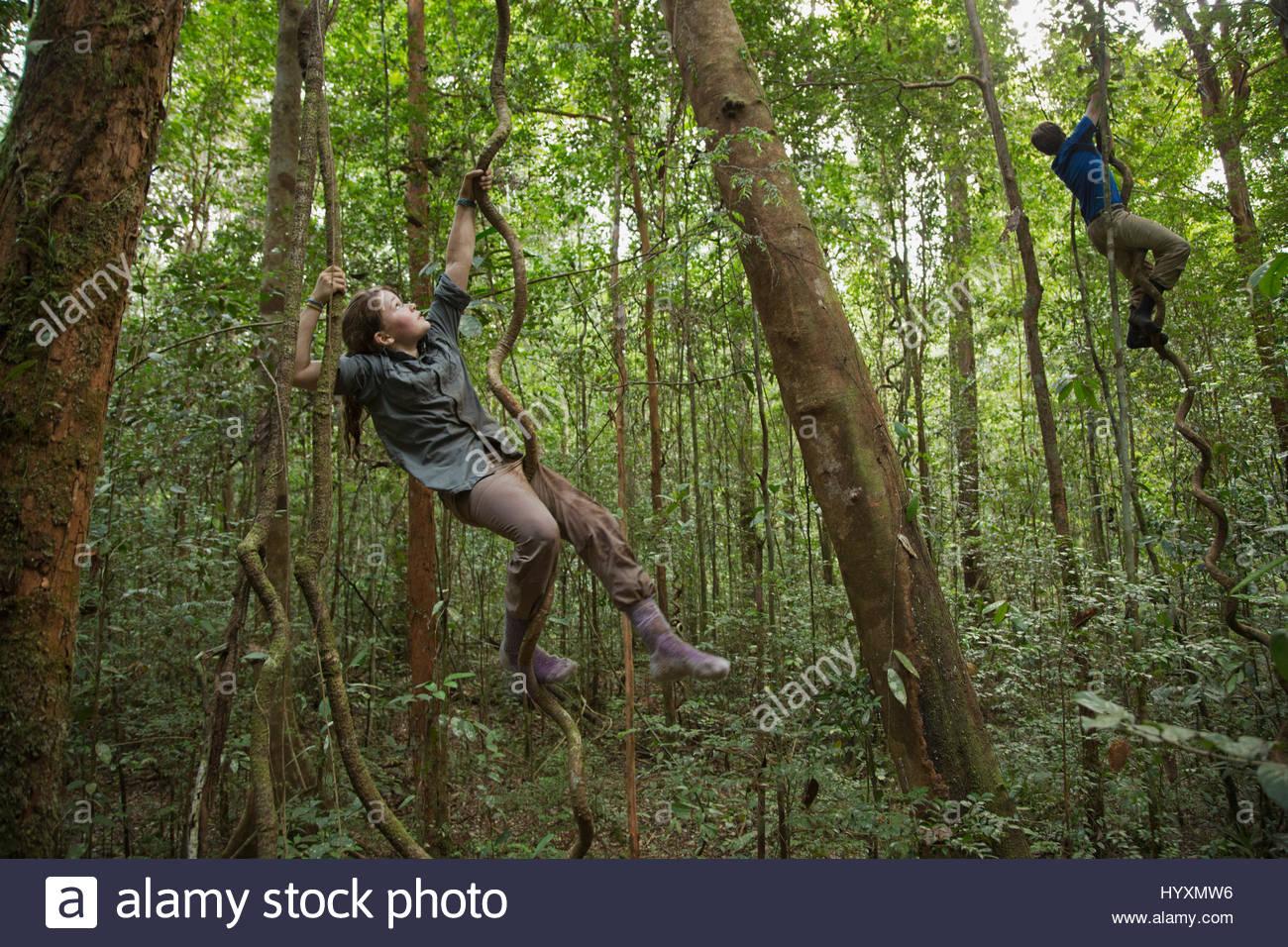 Teenagers climb lianas in Gunung Palung National Park. - Stock Image