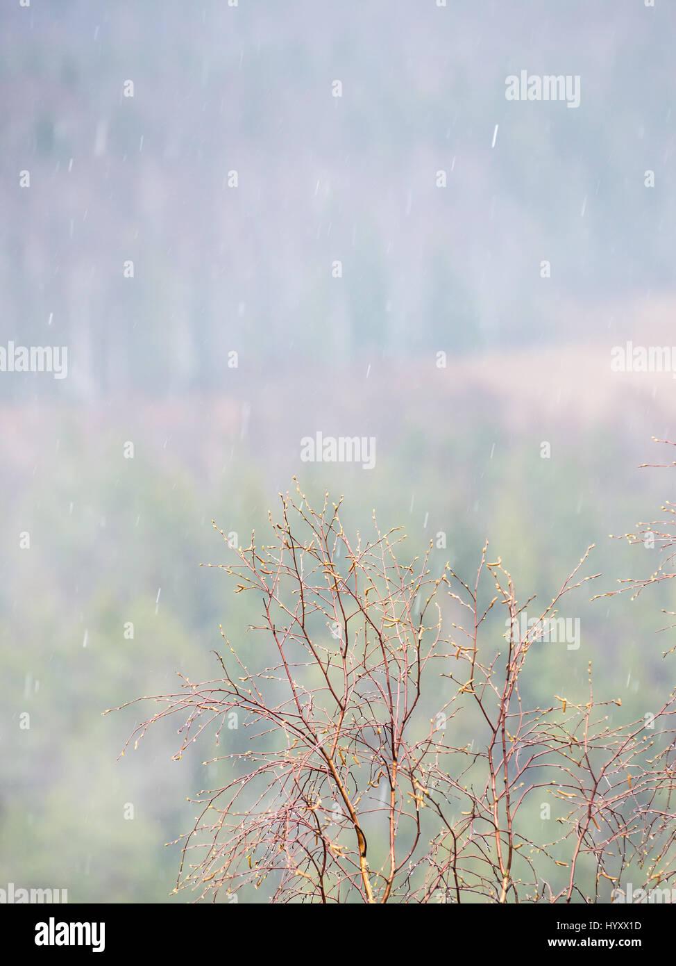 Misty Rain Nude Photos 12