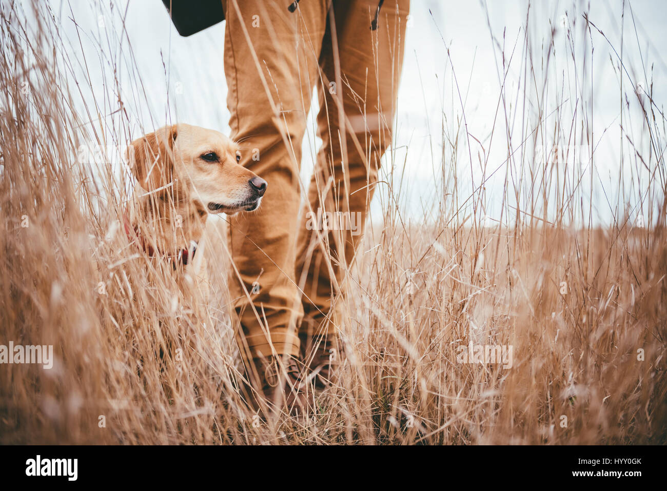 Hiker and dog standing in high grass Stock Photo