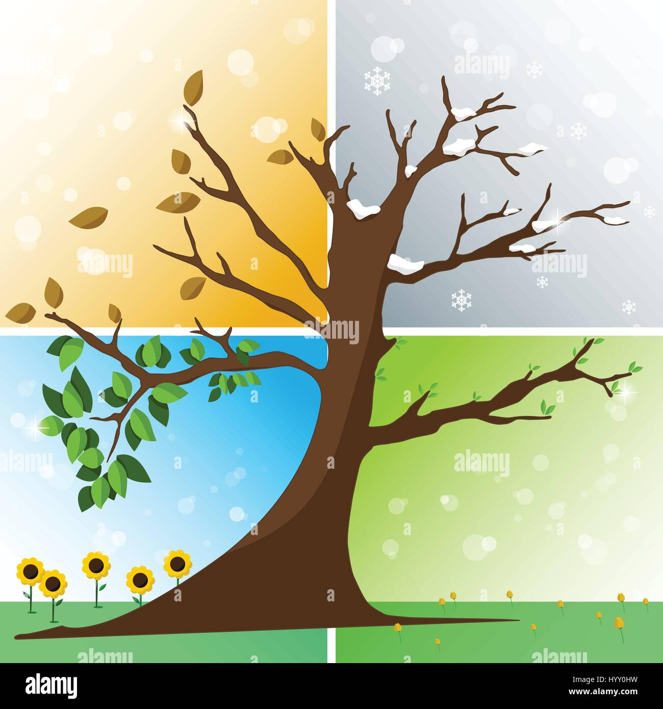 Four seasons in one tree - spring, summer, autumn, winter vector illustration - Stock Image