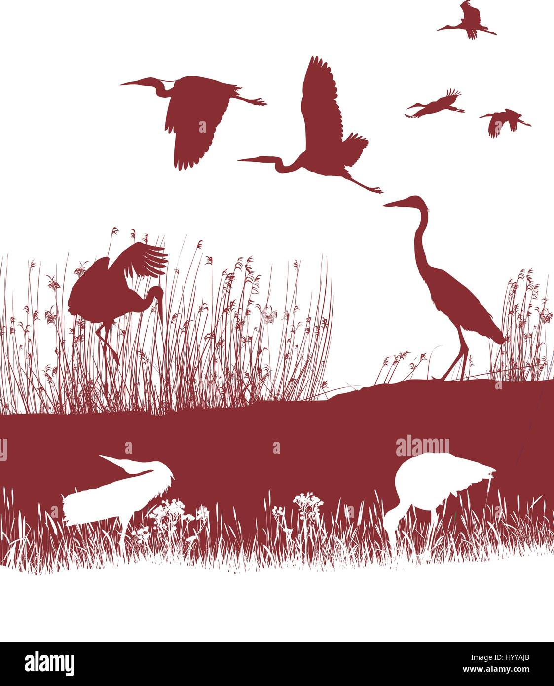Storks and Herons on the shore - Stock Vector
