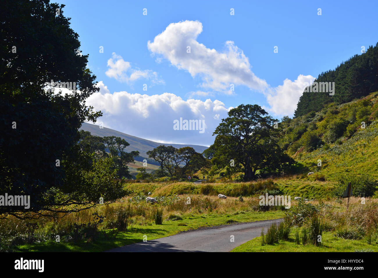 Harthope Valley and Cheviots, Northumberland - Stock Image