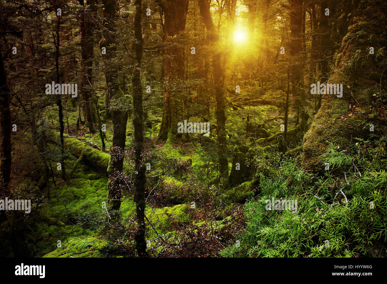 Dark mysterious forest in New Zealand Stock Photo